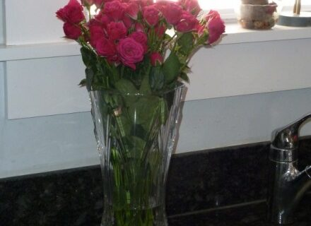 Pink Roses Counter Winter