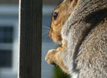This Squirrel a Friend of Yours?
