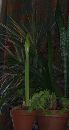 bud-stalk-3-small-web