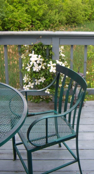 Clematis Adds to Deck View