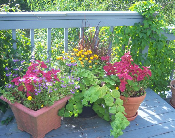 Early Fall Container Arrangement in Red, Green, Purple, Yellow and Blue