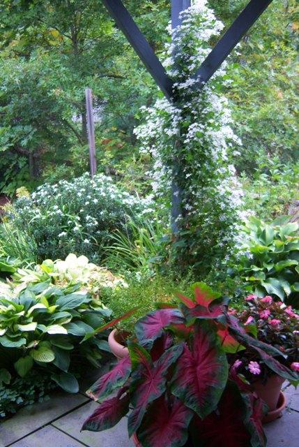 003-c-wl-abundance-sept-garden
