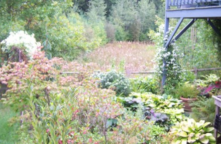 Clematis Frame the Mid-September Garden