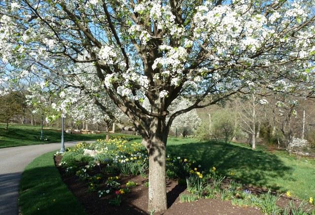 025-c-wl-spring-bulb-garden-mixed-border-meadow-mown