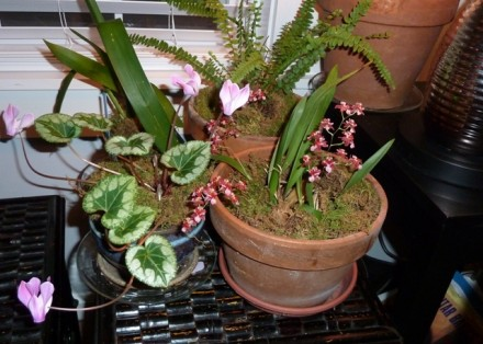 Pretty in Pink–Gardens Move Indoors