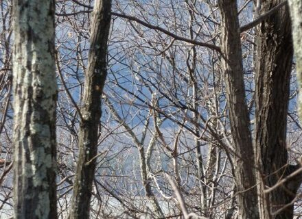 Subtle Pallet Awaits You in Winter's Woods