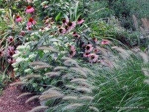 plantings-mvb-pennisetum-sedum-echinachea