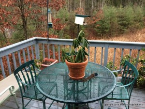 Before: When I was ready to add the other foliage, I placed on the table the container with the Rhododendron only.