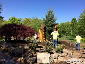 Planting the 16 foot tall Spruce