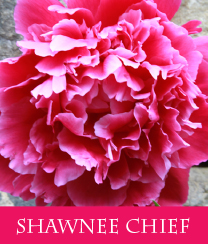 Shawnee Chief
