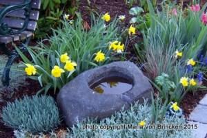 yellow daffodils in my spring flower garden