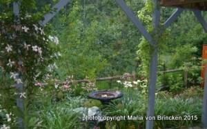 spring garden with white clematis 'grandiflora' in my spring flower garden