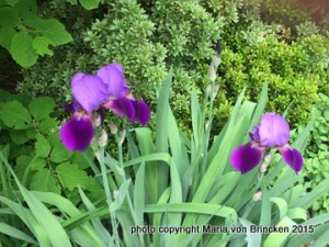 perennial & shrub combination