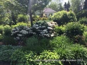 perennials & shrub combinations