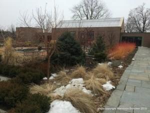 1-195 Cornus midwinter fire _stems and grasses Tower Hill Winter Garden Courtyard