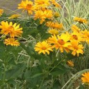 Take a Moment with Your Garden-Relieve Stress